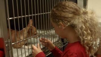 petite fille regardant chien en cage chez les vétérinaires