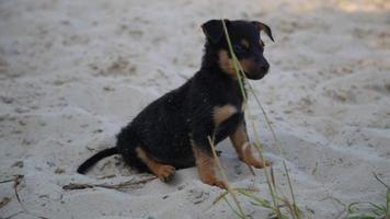 lindo perrito en la arena de la playa mojada