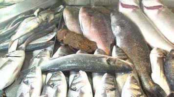 pescadería video