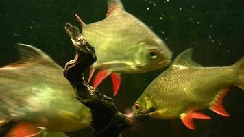 acquario di pesci