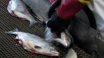 Fischereiindustrie video