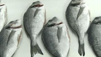 pescado fresco video