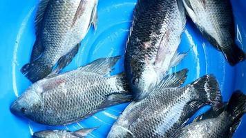 peixe fresco video