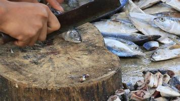 tagliare il pesce