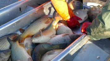 Industrie de la pêche