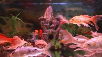 poissons d'aquarium video