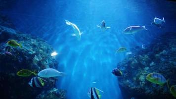 peixe subaquático video