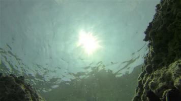 sous l'eau: poisson