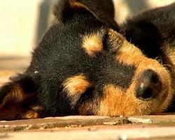 cane rilassante