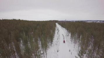 Luftaufnahme von Schlittenhunden, die durch eine Spur im Winterwald laufen - harads, boden Gemeinde, norrbotten, Schweden