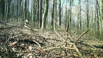 hond die in het bos loopt
