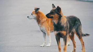 perros sin hogar en la calle. camara lenta video