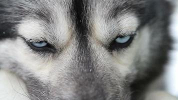 schor oog closeups.mov video
