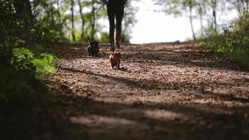 donna cammina con due cani nel bosco video