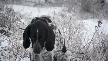 cane maculato seduto nella neve
