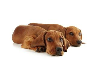 occhi dei cuccioli