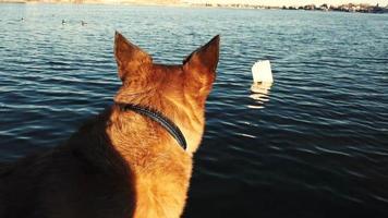 il cane pensa di infrangere la legge