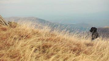 Chien labrador noir dans un paysage d'automne de haute montagne