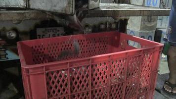 trasferimento di pesci vivi dalla scatola da pesca in metallo alla cassa di plastica