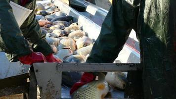 Fischereiindustrie