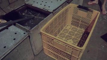 Übertragung lebender Fische von Metall-Angelboxen auf Plastikkisten mit einem Handnetz