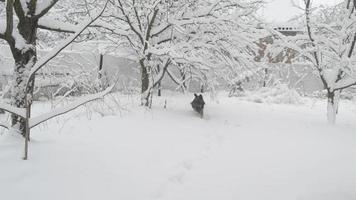 Perro activo alegre en la nieve en el campo