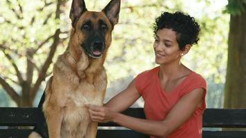 jeune femme, fille, gens, animal de compagnie, dog sitter avec des chiens alsaciens