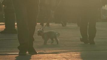 cachorros na rua video