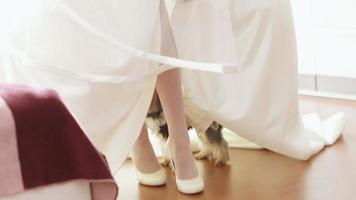cachorro da noiva