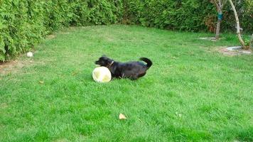 Hund und Ball