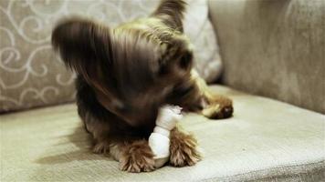 perro comiendo hueso video