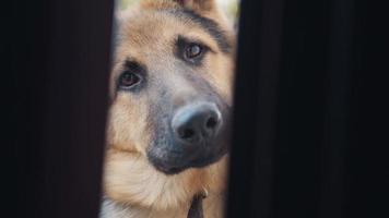 grote mooie hond kantelbare kop