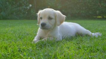 cucciolo carino in giardino video