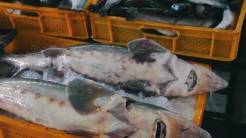 pescado fresco en hielo en el mercado mostrador video