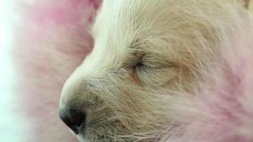 chiot nouveau-né dort