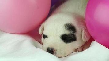 Neugeborener Welpe schläft