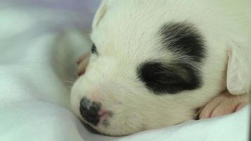 cucciolo appena nato che dorme