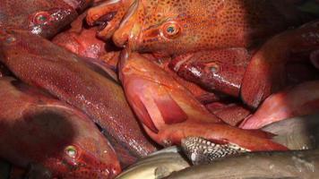 peixe em um mercado