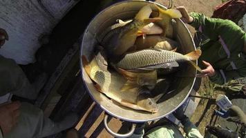 allevamento di pesci
