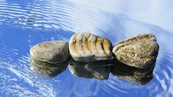 peixe de pedra video