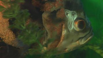 pesce grosso