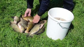 peixe colocado balde