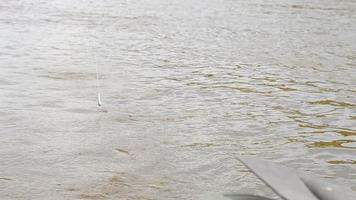 a pesca do poleiro no riacho
