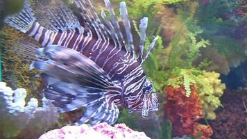 pesce grosso video