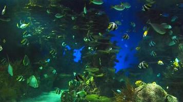 peixes de cardume video