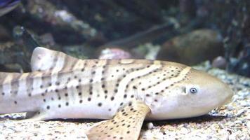 poisson de mer video