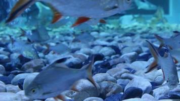 unter Wasser fischen video