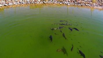 pesci tartarughe video