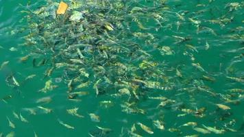 marine fish video