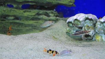 Exotic fishes video
